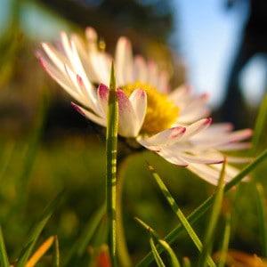 Flowers-Gaense