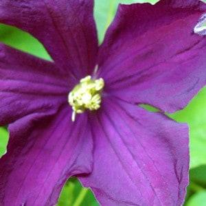 Flowers-Winde